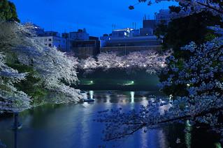 Sakura@Kudanshita_02