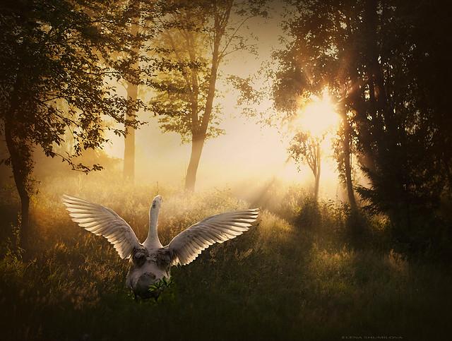 aleshurik - ...towards the light...