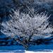 冬の華 by Yukio.s