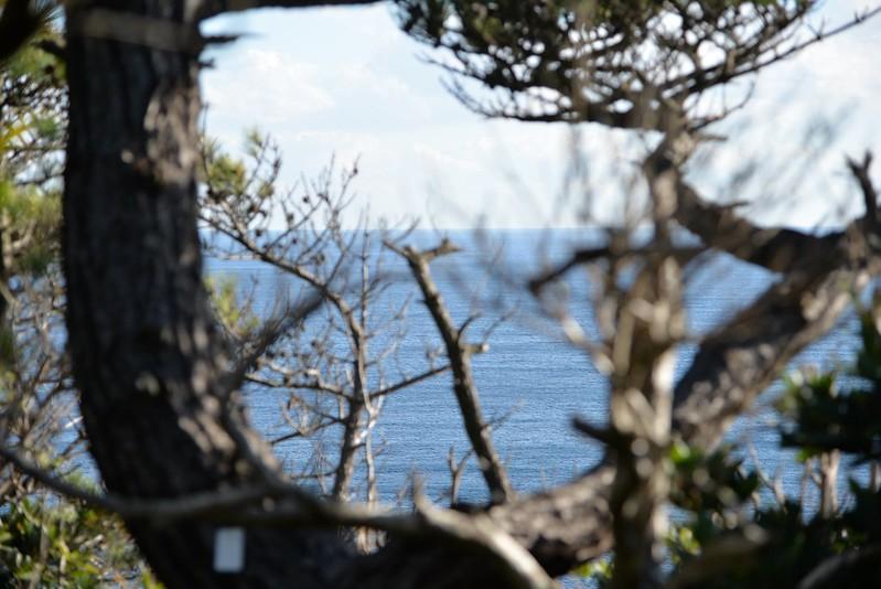冬の神津島への旅 tokyo reporter 島旅&山旅 2016年1月16日
