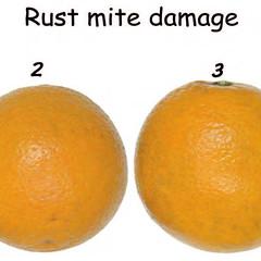 citrus-0186