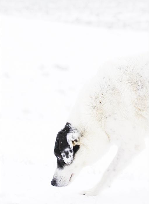chloe snow