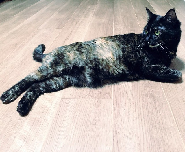 セクシーショット😽 #cat #cats #catsofinstagram #catstagram #instacat #instagramcats #neko #nekostagram #猫 #ねこ #ネコ ネコ部 #猫部 #ぬこ #にゃんこ #ふわもこ部