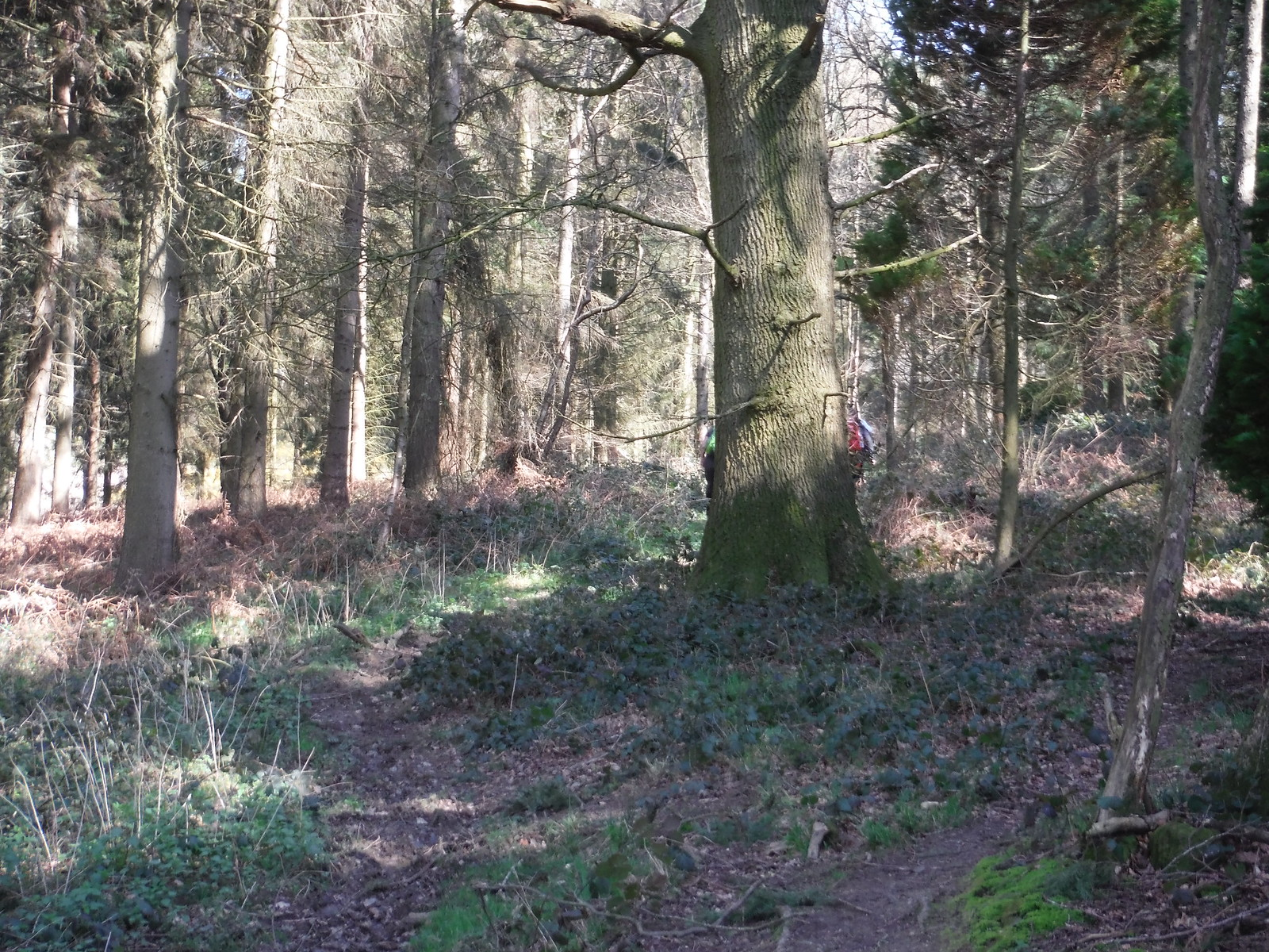 Burgess Copse SWC Walk 260 Aldermaston to Woolhampton [Midgham Station] (via Frilsham)