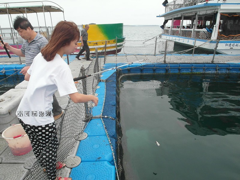 澎湖好玩和慶半潛艇海上牧場鮮蚵吃到飽體驗鬥海鱺