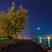 Moonlight Blossoms by jadennyberg