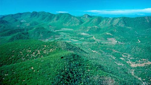 ป่า ประเทศไทย