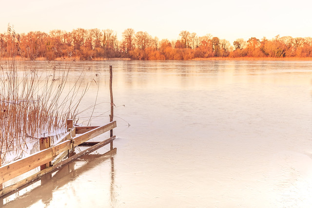 A frozen South Walsham Inner Broad