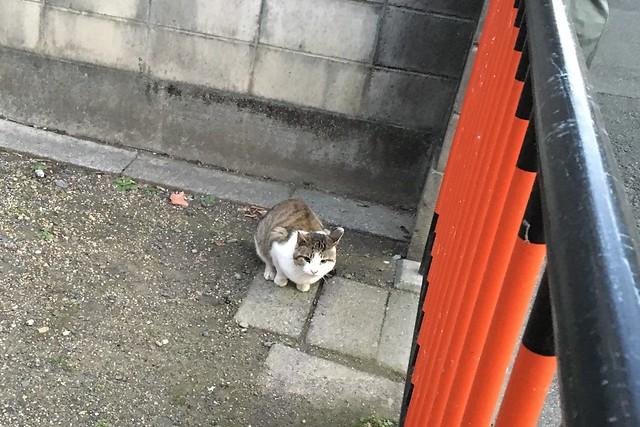 Today's Cat@2016-02-12