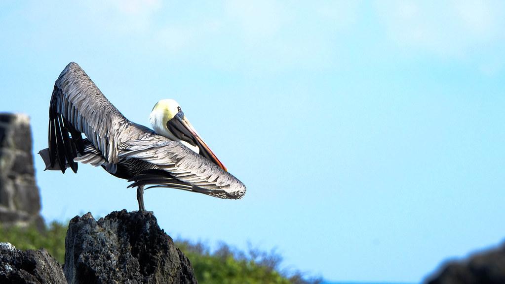 Punta Suárez, Española, Galpagos