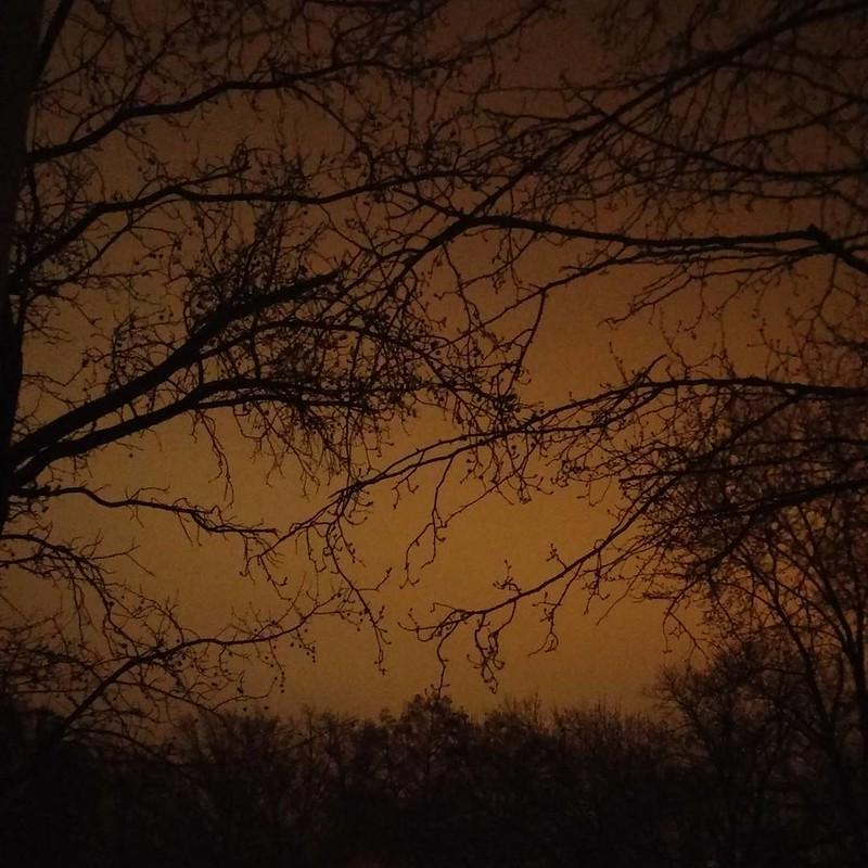 evening sky through the limbs  #evening #sky