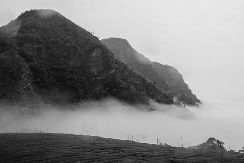 浮在雲海中