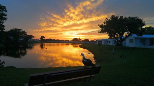 sunset sky lake duck goldenhour