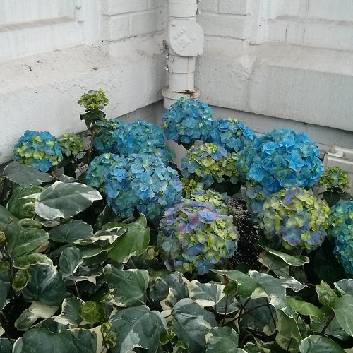 Flowers, Allan Gardens #toronto #allangardens #gardens #flowers