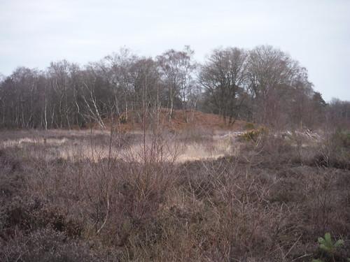 Hillock on Bucklebury Common Heathland