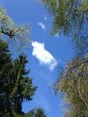 lazy under a blue sky