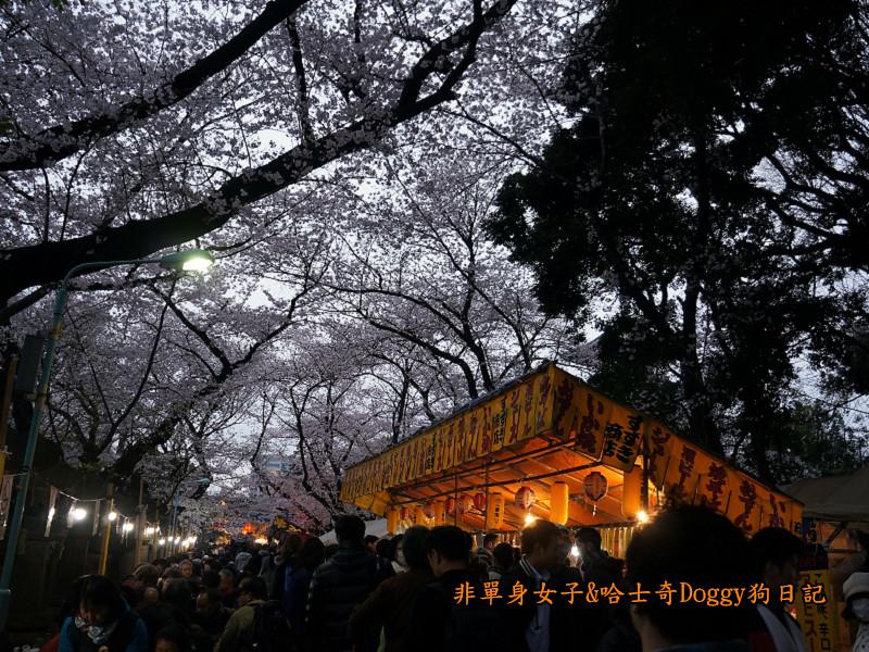 日本東京上野恩賜公園櫻花14