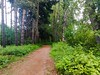 Another forest, another trail. #columbiasloughtrail #columbiaslough