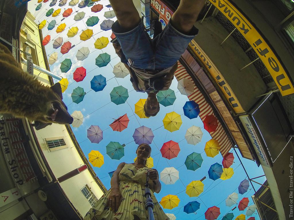 Umbrella Street selfie with dog