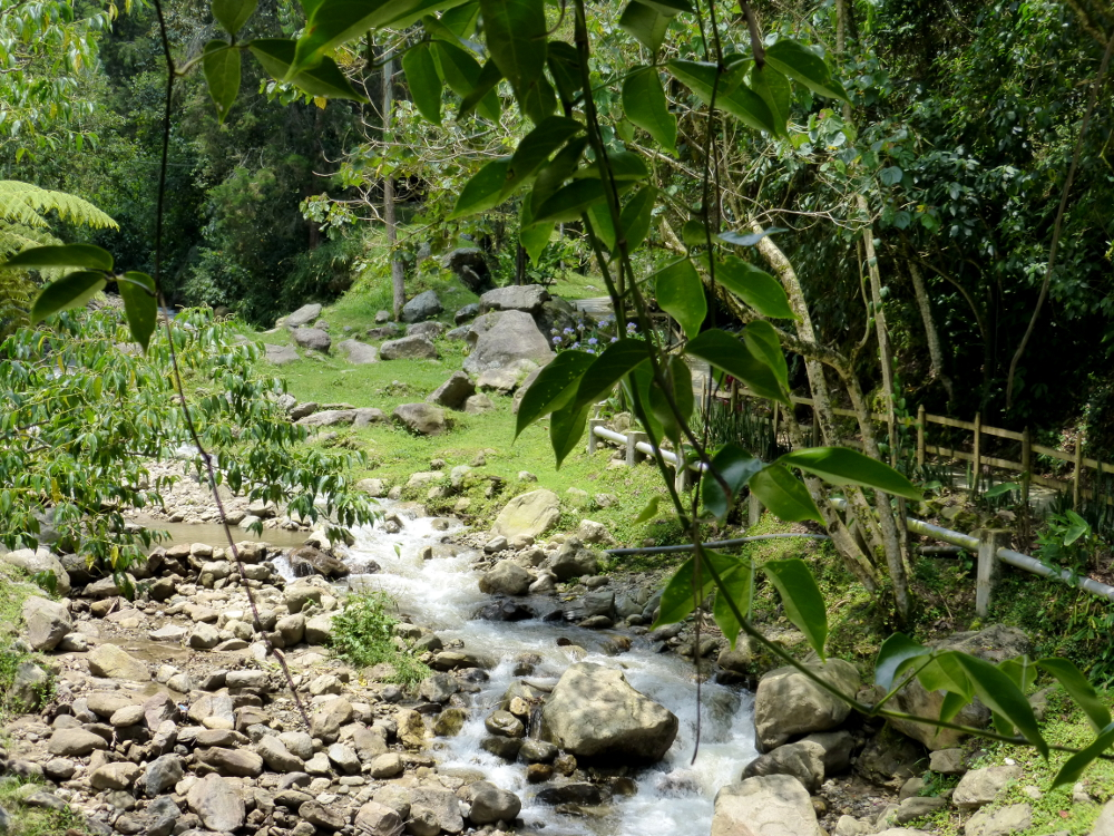 Stream through El Salado