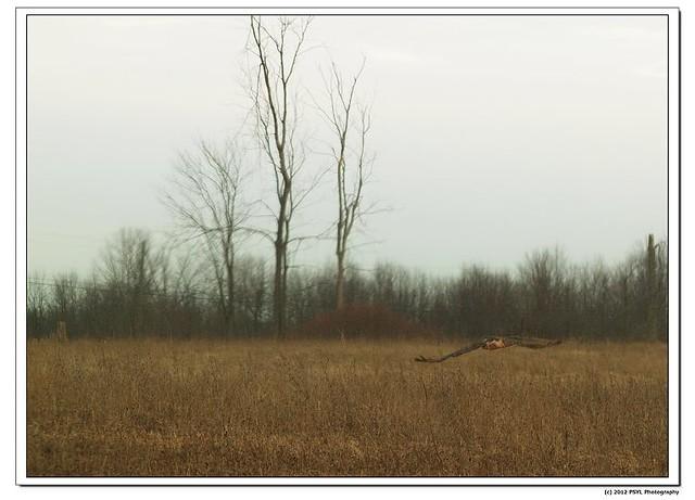 2012-01-30-36
