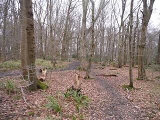 Paths in Wormley Wood