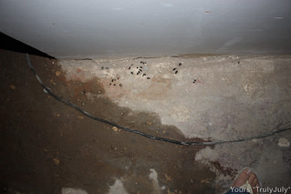 Rat droppings: Check out a rat's sure telltale sign of having taken over your space!