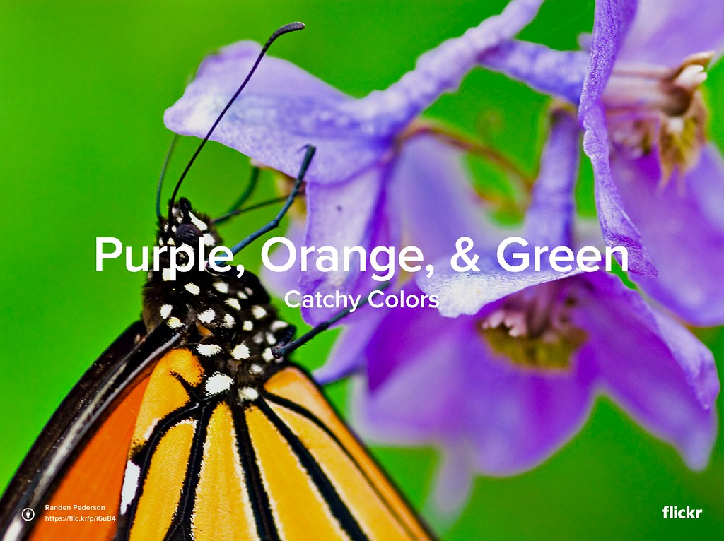 Catchy Colors: Purple, Orange & Green