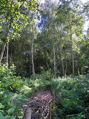 GOC Walthamstow to Stratford 129: Wick Wood, Hackney