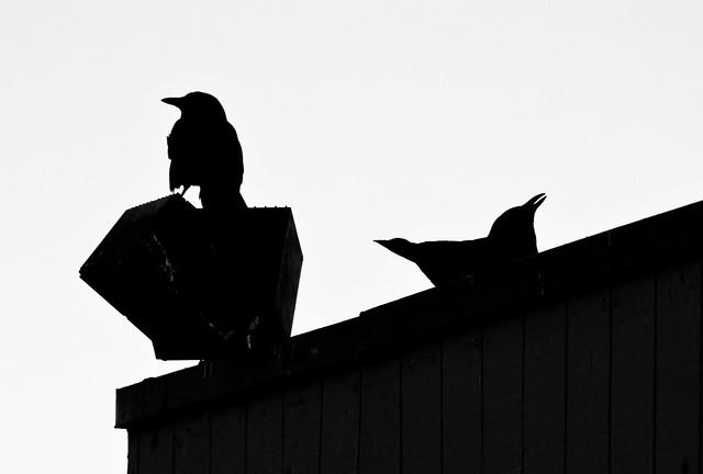 Rooftop Duet
