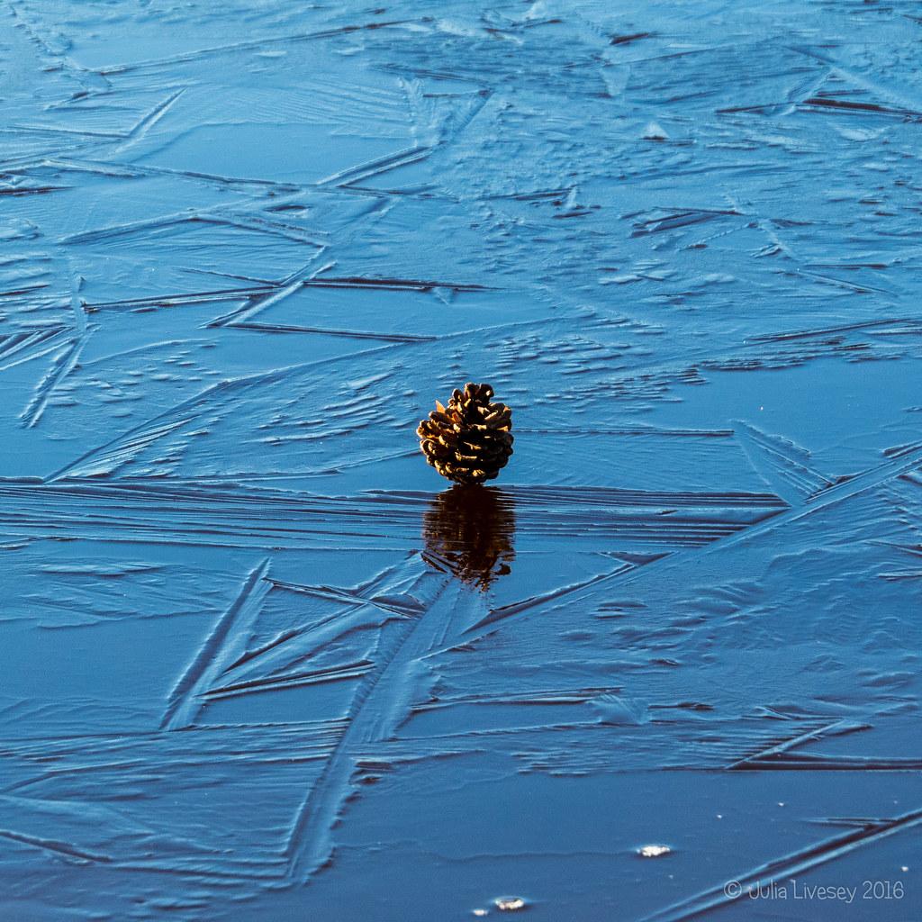 Pine cone on ice