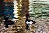 Ente mit Farbklecksen im Wasser by Housetier84