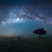 Masai Mara at Night by Wei, Willa