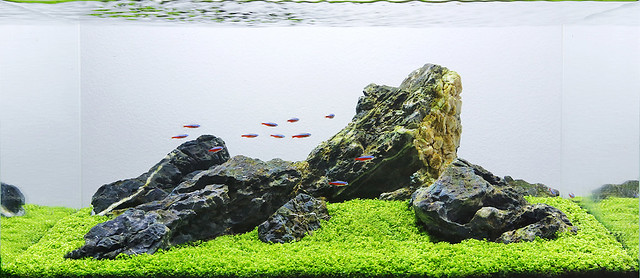 George Farmer refer from http://www.paludarium.net/27700260632229034269/aquascape-analysis-of-one-pot-iwagumi