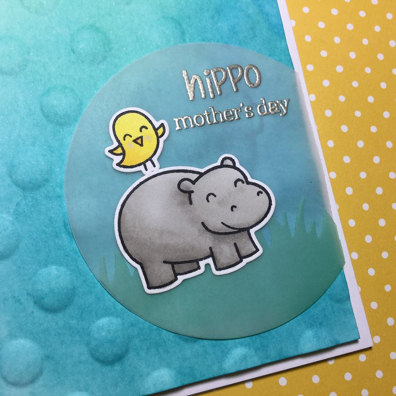 Hippo Mother's Day close up