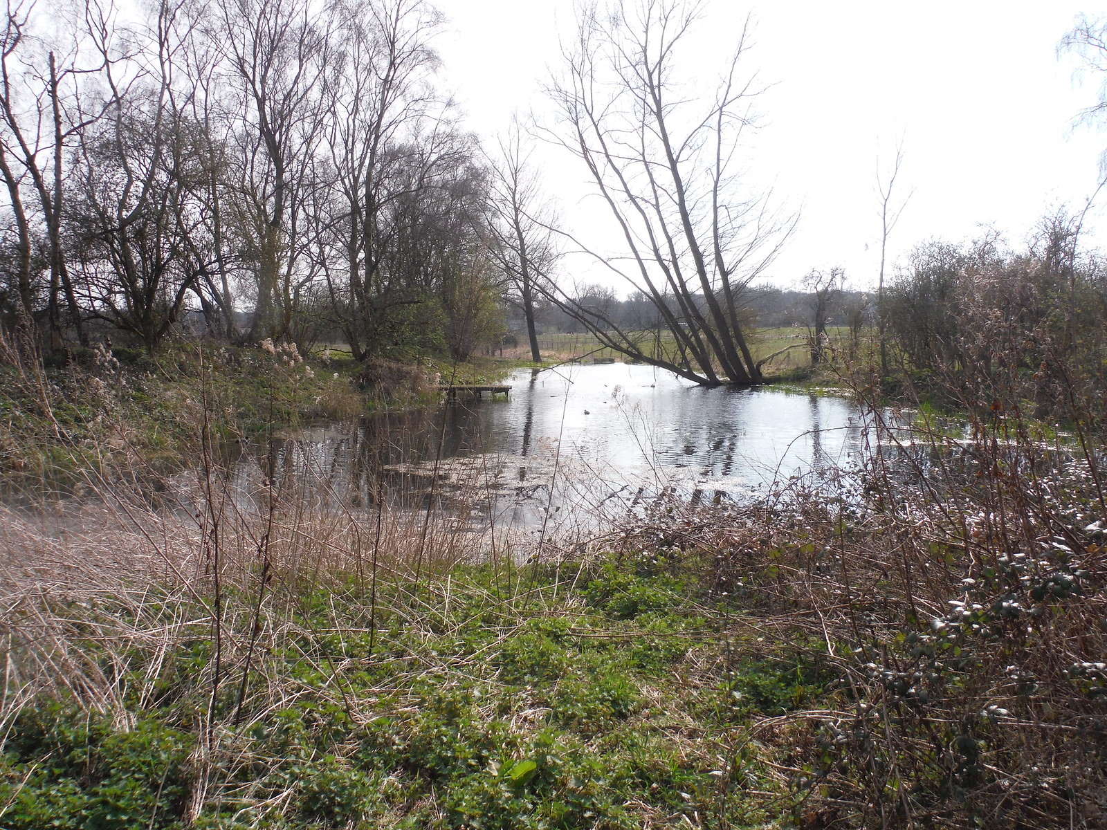 Pond in the Pang Valley SWC Walk 260 Aldermaston to Woolhampton [Midgham Station] (via Frilsham)