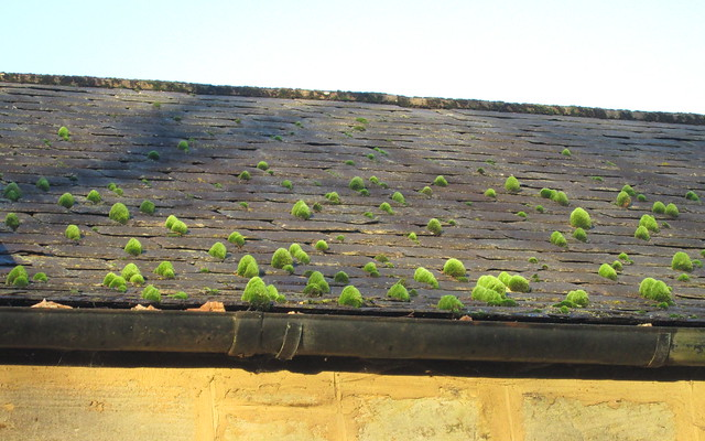 Moss on Roof (i)