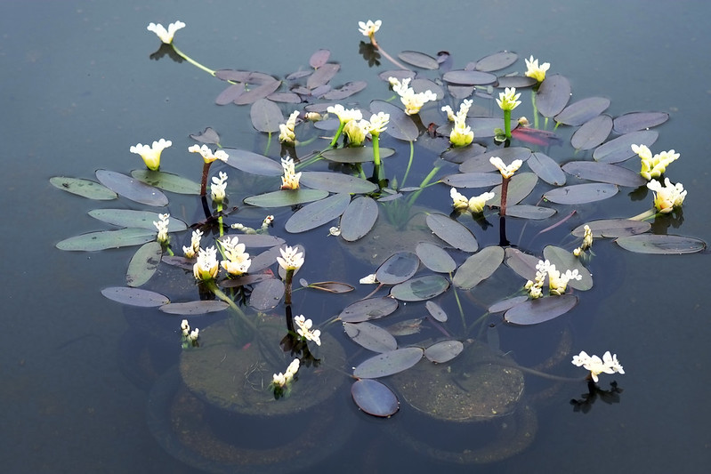 Miniture lilies at Chollipo Arboteum