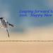 A leaping shrike by Photosuze
