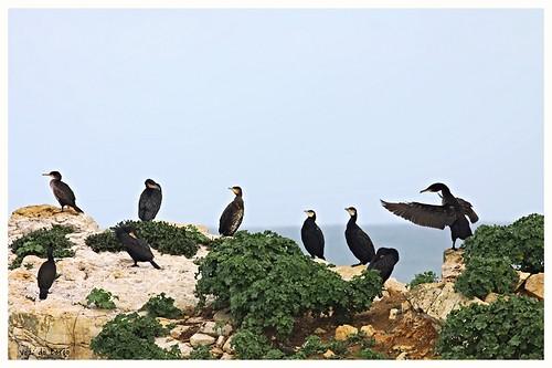 """""""Sermão aos corvos"""""""