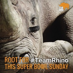 As you root for your team during the #SuperBowl, you can also root for rhino conservation! Join #TeamRhino at www.TeamRhino.org and help a species win its fight for survival! #SB50