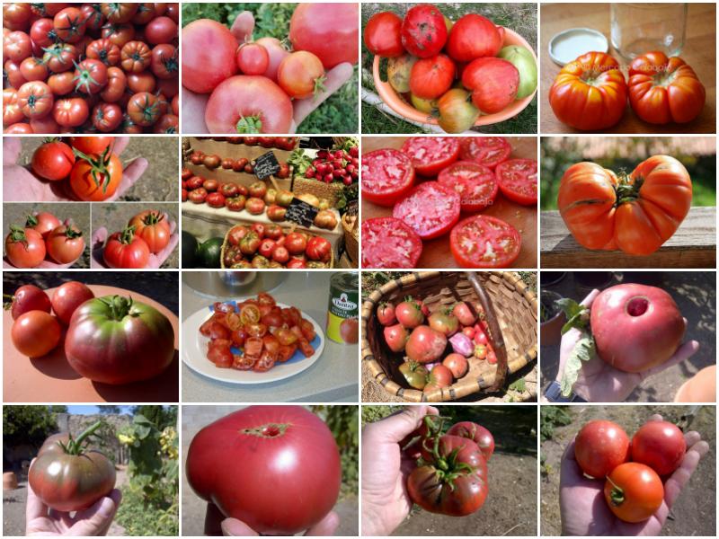 Tomates de verano