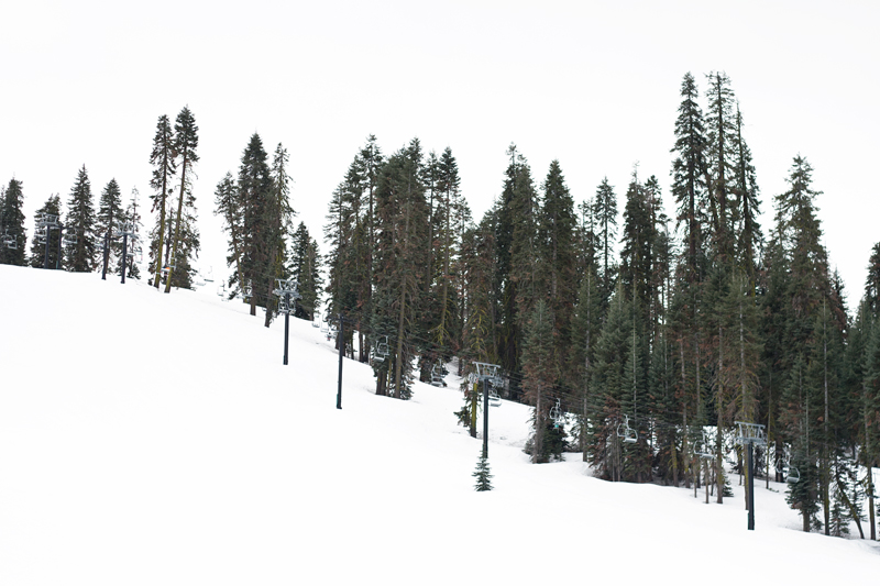 09yosemite-snow-skiing-badgerpass-trees-travel