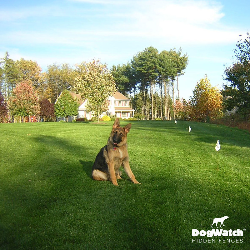 German Shepherd, DogWatch by Kriger Fence (PA)
