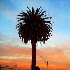 Palms and sunset - magic :) #michfrost
