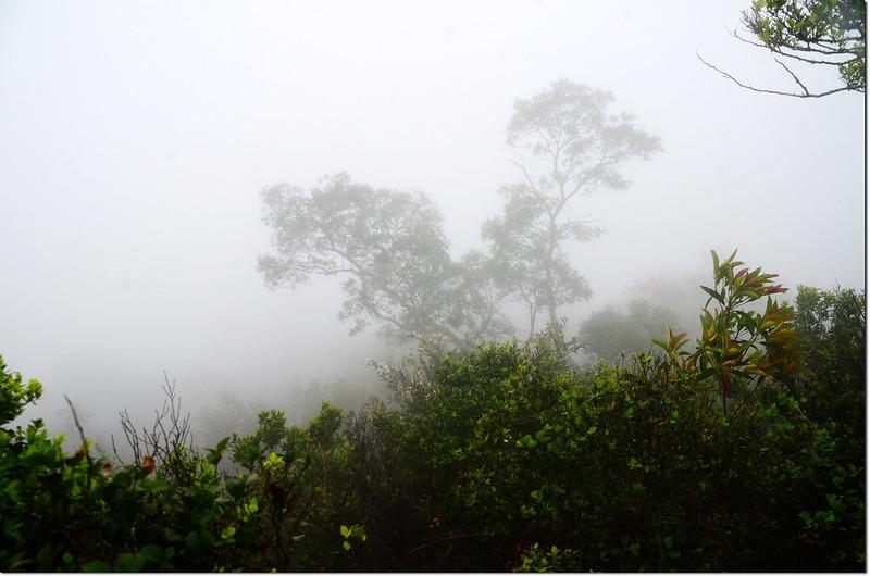 濃霧籠罩下的巴層巴墨山前山頭