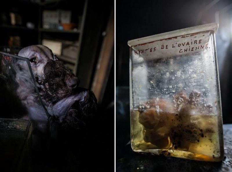 驚魂比利時「廢棄獸醫學院」福馬林的怪誕美學13
