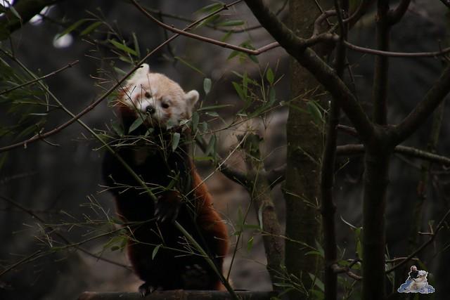 Tierpark Hagenbeck 02.01.2015   28