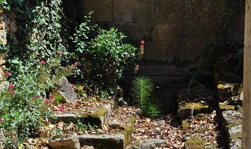 Ecrin pour une prêle, ruines de l'ancienne abbaye Saint Maurice (XIIe, XIIIe), Blasimon, Entre-Deux-Mers, Guyenne, Gironde, Aquitaine, France.