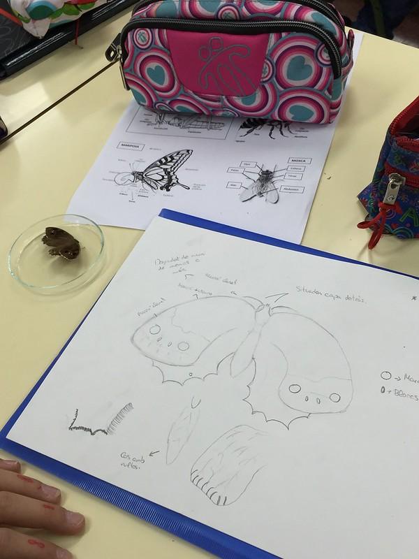 Taller naturalista- Dibujando miriápodos, noviembre 2015